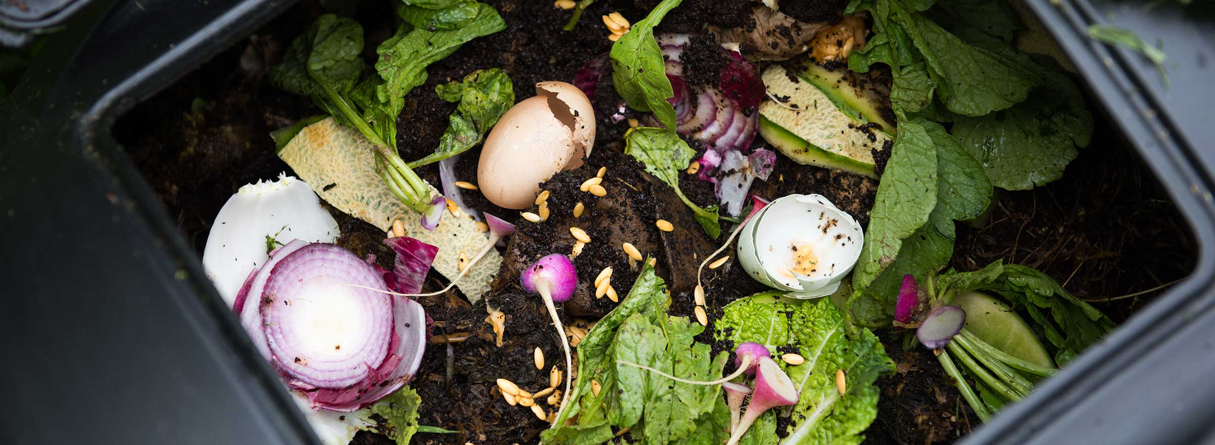 Composting for Restaurants: How and Why